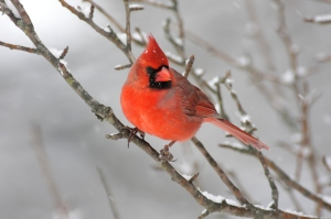 Get your bird seed before the snow storm tonight!
